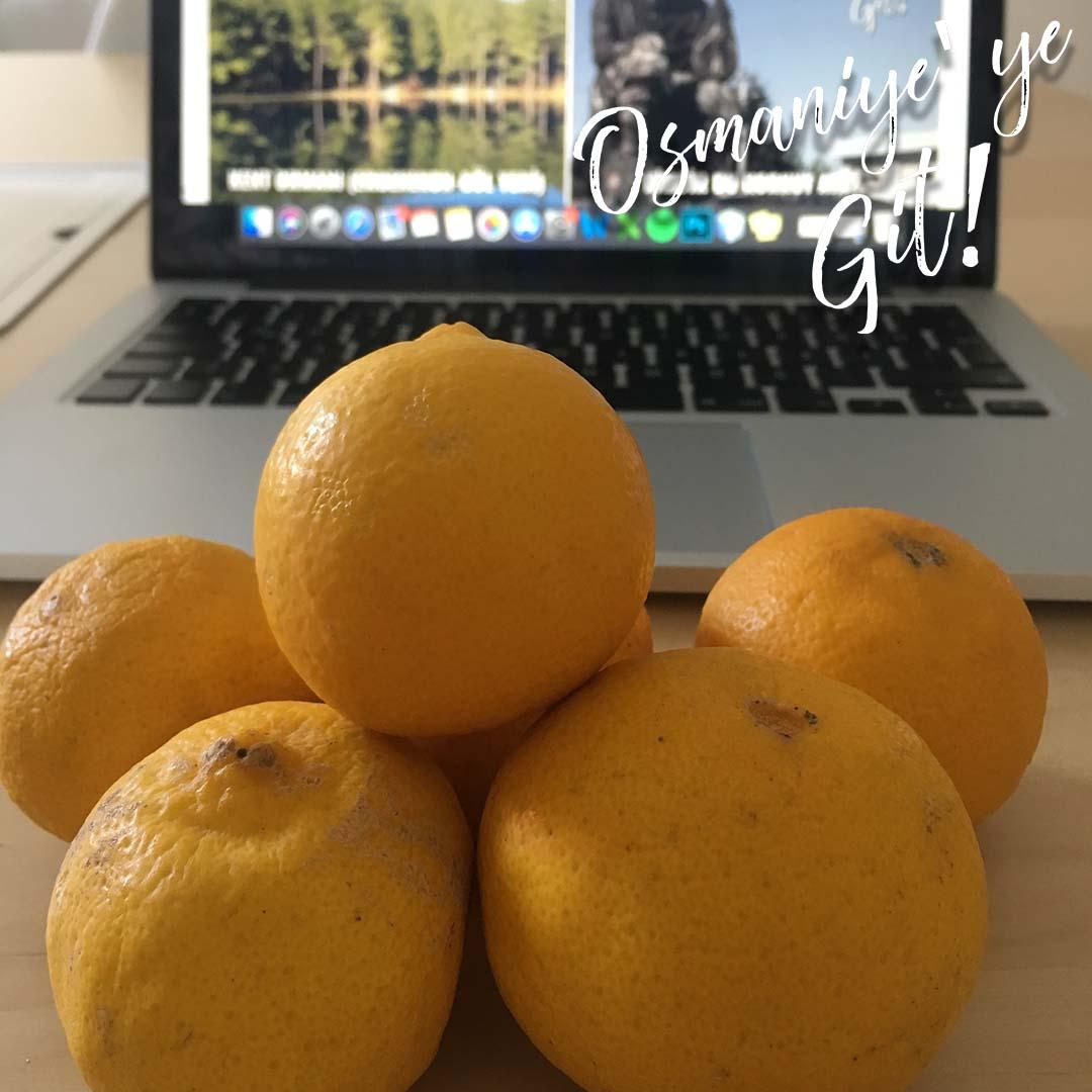 Osmaniye'nin tatlı limonu